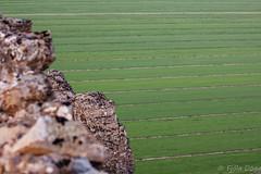 morning light (Fjola Dogg) Tags: canon canon50d evropa hrunamannahreppur iceland landscape langholtsfjall akrar europe evrpa fields nature nttra tn rnesssla sland southiceland naturaleza natur natura naturae natuur naturen naturalesa natureza nopeople islandia islande islanti islndia islann islanda izlanda izland ijsland islando island sland lislande lanature fjladgg fjoladogg green morninglight