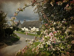 Thatched Cottage (dawn.v) Tags: uk england texture spring village blossom cottage dorset april thatchedcottage pinkblossom englishvillage chocolateboxcottage picmonkey