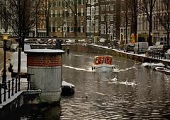 They follow the swans through the canals of Amsterdam.... (martin alberts Pictures of Amsterdam) Tags: amsterdam oudezijdsvoorburgwal wallen ivresse unescowerelderfgoed martinalberts redlighdistrict zwanenridder postcode1012