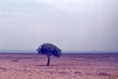 Overgrazed arid savanna in northern Kenya, July 1973  img192 (Hart Walter) Tags: tourism coffee cattle rice tea goats sunflower sisal camels sugarcane deforestation desertification tef africanlanduse baobabdestruction