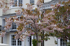 Blossom Tree (WickedMark) Tags: pink tree canon brighton blossom stockholm may epic oldsteine 2013 1d4 sigma50mm14 1dmark4