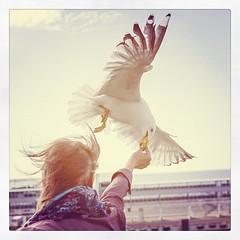 #seagull #birds #marine #tourism #tallinn #estonia #travel (Marek Paju) Tags: square squareformat gotham iphoneography instagramapp uploaded:by=instagram
