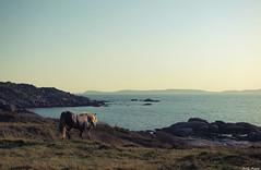 (Ana Aira) Tags: sea horse costa water caballo coast mar agua