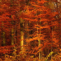 Autumn Light in the Forest (Batikart) Tags: park autumn light orange plants brown sun sunlight black color colour tree fall nature leaves yellow forest canon germany season landscape geotagged outdoors deutschla
