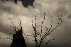 Propriano, Corse - Septembre 2013 (Anne Sarthou - Homophotographicus Sapiens Sapiens) Tags: trees leaves de leaf site woods forrest corse branches corsica ile cauria du arbres val trunk ajaccio parc fort bois feuilles calanques pinarello tronc bonifacio piana rondinara golfe dese naturel campomoro portovecchio sartne roccapina sarte propriano calanches valinco aiacciu viggianello baut campumuru dolva pruprianu pinarullu