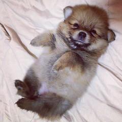 ที่นอนคนนี่มันนอนสบายจริงๆนะค่ะ^^ #น้องถิงถิง @shompoojao