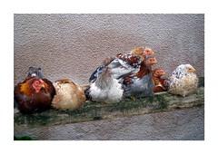 Chicken Party (erix!) Tags: chicken birds animals collage gimp ef