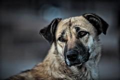 Amigo fiel (Carlos Ramirez Alva) Tags: dog animal amigo friend cusco perro doggy bestfriend hdr perrito loyal fiel leal mejoramigo amigofiel