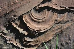 Dropstone (correia.nuno1) Tags: paleozoic paleozoico