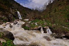 Huser yaylası (aycasan) Tags: trees hot nature turkey waterfall plateau ot rize yeşil yayla ağaç bitki dere sıcak doğa şelale huser doğukaradeniz aycasan