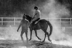 polvo (nils tiburon) Tags: animal caballo fuerteventura canarias deporte pferd reiten hors
