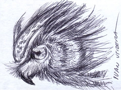 buho a lapicero (ivanutrera) Tags: draw dibujo drawing dibujoalapicero dibujoenboligrafo boligrafo animal ave bird pajaro pjaro sketch sketching ilustracion owl buho