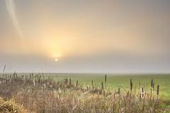 simple (Christian Collins) Tags: field campo sol sun fog foggy mist misty grass cattail cattails canon t2i efs24mm contrail simple sunbeam paisaje brumoso