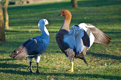 (JOAO DE BARROS) Tags: barros joo animal bird