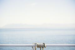 Come, sail away with me. (JosefineKphotography) Tags: canon canoneos5dmarkiii canada britishcolombia vancouverisland beautifulbritishcolombia canonef50mmf14 bokeh beyondbokeh