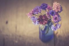 Very last of the bachelor buttons (jm atkinson) Tags: purple bachelor button vase jar blue pink flowers