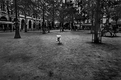 * (Christophe.Frossard) Tags: leica summilux 28mm christophefrossard mattanga mirrorless paris streetphotography street dog fullframe uncropped cute