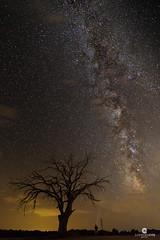 Milky Way over the century-old oak (Quercus ilex) (Juan Mara Coy) Tags: va lctea milkyway castillalamancha albacete pozocaada espaa spain night noche estrella very long exposure sky cielo nocturne nocturna stars aire libre canonefs1585mm