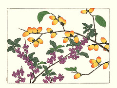 Autumn elaeagnus and date-plum (Japanese Flower and Bird Art) Tags: flower autumn elaeagnus umbellata elaeagnaceae dateplum diospyros lotus ebenaceae hoitsu sakai kiitsu suzuki kimei nakano nihonga woodblock picture book japan japanese art readercollection