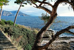 French Riviera... in winter ! (jean_game) Tags: paysage extrieur rivierafranaise ctedazur lumire mer couleurs chemindesdouaniers landscape outdoor frenchriviera riviera light sea colors coastalpath