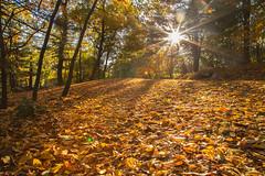 Sun splashed Sunday (nojo1820) Tags: sunburst fall folliage outdoors leaves autumn