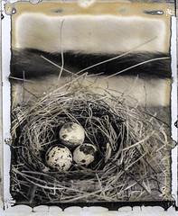 Nested (engjoneer) Tags: caltarsii135mmf56 film new55 print shenhao4x5 stilllife