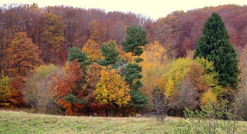 #gasparnorbertpalphotography #hungary_gram #hungary #loves_hungary #naturephotography #nature #nature_perfection #natureza #autumnfeeling #autumn #amazingartofearth #places_wow #autumncolors #forest_daily #tree_magic #tree_brilliance #exclusive_trees #ama