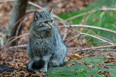 WildeKat16599 (Esther van Rooijen) Tags: bayerischerwald animals wildlife