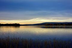 A whiter shade of pale (sakarip) Tags: sakarip finland north northern lakescape fall autumn inexplore12102016 inexplore water 84inexplore loukusa taivalkoski loukusanjrvi posiontie procolharum