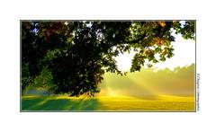 P2110238 (cowsandgirl71) Tags: panasonic fz200 france parc de sceaux couleur jaune landscape lumire prs vert arbre