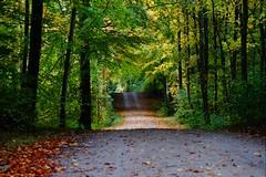 Autumn (Jaedde & Sis) Tags: path road autumn fall forest gribskov challengeyouwinner herowinner challengefactorywinner thechallengefactory