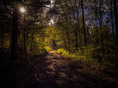 Path Info the light (And Hei) Tags: eifel germany euskirchen sonne sun herbst autumn mft em10 olympus