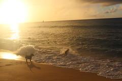 IMG_1423 (michelleingrassia) Tags: banzaipipeline northshore oahu hawaii hi sunset beach