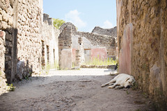Pompi, Italy (Mael Arnaud) Tags: chien pompi italy campany dog italie campagnie tired fatigue paysage ville mistre mistery city sun summer holidays 2016