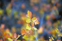 fall leaves (Father Tony) Tags: fall autumn october sd southdakota canon canonefs1755mmf28isusm canon50d colorful blackhills rapidcity unitedstates