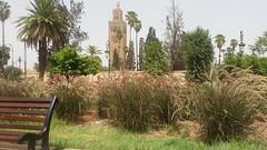 Koutoubia Square marrakech new plantations (riad marrakech Al Ksar Spa) Tags: koutoubia mosque marrakech cop22
