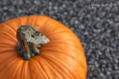(jbeneventophotos) Tags: pumpkin autumn texture macro closeup outdoors blacktop nature orange