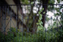 green in the city (Steve only) Tags: rollei 35rf voigtlander bessa r2 canon lens 50mm f12 5012 l39 leicascrewmount leicathreadmount ltm m39 rf rangefinder fujifilm 富士業務紀錄用カラーフィルム100 100 film epson gtx970 v750 snaps leaves