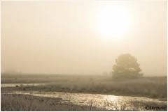 golden hour (HP01985) (Hetwie) Tags: nature strabrecht rijp ochtend nachtvorst kou natuur landscape goldenhour goudenuurtje sunrise landschap zonsopkomst vorst heather frost frozen ijs heide ice strabrechtseheide lierop noordbrabant nederland
