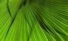 Fächer (ruedigerhey) Tags: blumen gebäude hamburg freie und hansestadt kanäle landschaften natur objekte orte pflanzen schafe ziegen lachen botanischer garten innenstadt