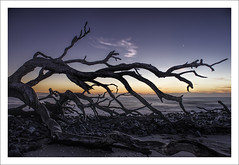 Driftwood beach first Light (Fraser Ross) Tags: driftwood driftwoodbeach goldenisles georgia romanticbeach firstlight deadtrees drowned swallowed sunriseatthebeach nikond800 nikon2470mm topazsoftware