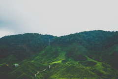 DSCF1129 (tzeyangtan) Tags: cameron highlands getaway green sgpalas tea plantation photography