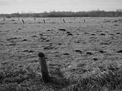 moles and poles (michaelmueller410) Tags: black white bw schwarzweis monochrome marsh marshland moor wiese maulwurf maulwurfshgel gras feld bume trees landscape wconp01 epl5