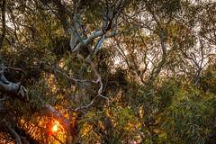Mt Ainslie Sunrise Canberra-19 (Quick Shot Photos) Tags: act australia canberra canon canoncollective visitcanberra australiancapitalterritory au