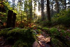 Enchanted forest (crazyxavphotos) Tags: mountain mountaineering hike hiking outdoor outdoorphotography nature naturephotography rock rocks forest magic enchanted enchantedforest magicforest fantasy fantasyland feerie sungazing sunglare wideangle sigma sigma1020 sigmalens nikon nikond3300