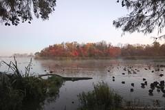 White Rock Lake. (Ollie girl) Tags: morning mist texas dallas whiterocklake thanksgiving autumn fall