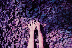 Hands That Create (thomas_anthony__) Tags: lomochrome lomochromepurple purple lavender hands hand leaves plant plants nature garden abstract shadow shadows lomo lomography film analog 35mm