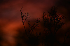Darkness comes (Steve.T.) Tags: nature whetmead whetmeadnaturereserve wildflowers wildlife nikon d7200 sigma18200 abstract dusk sunset evening mothernature