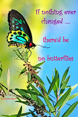 Change (aussiegypsy_Katherine, NT) Tags: motto words saying inspiration inspirational change handling managing positive changeforthebest lorraineharris cairnsbirdwing butterfly male ornithopteraeuphorion tropics tropical australia australian aussie aussiegypsy nature exotic wisewords