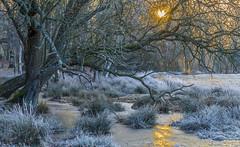 Winter Landscape (nicklucas2) Tags: frost frozen ice seasons winter tree grass landscape